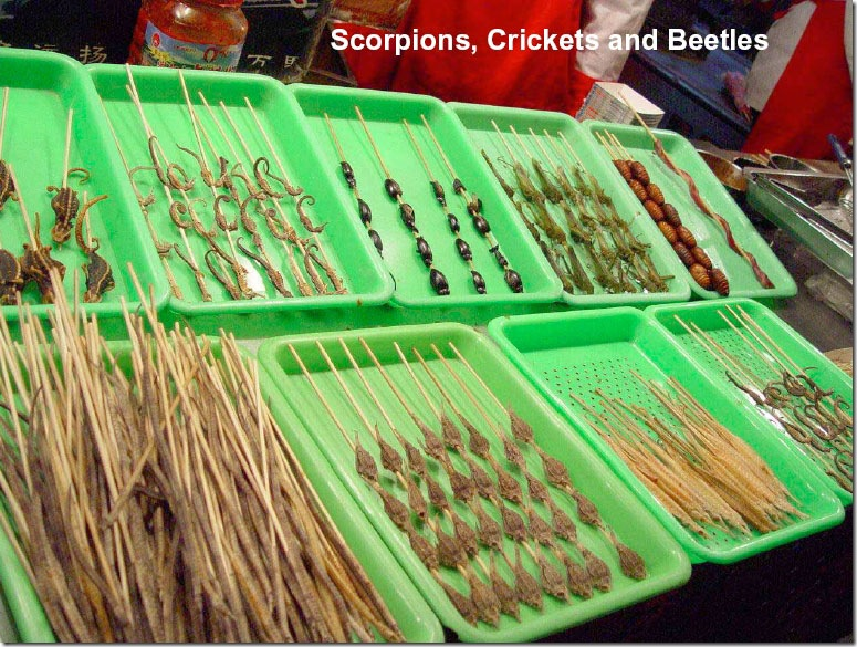 Scorpions, Crickets and Beetles