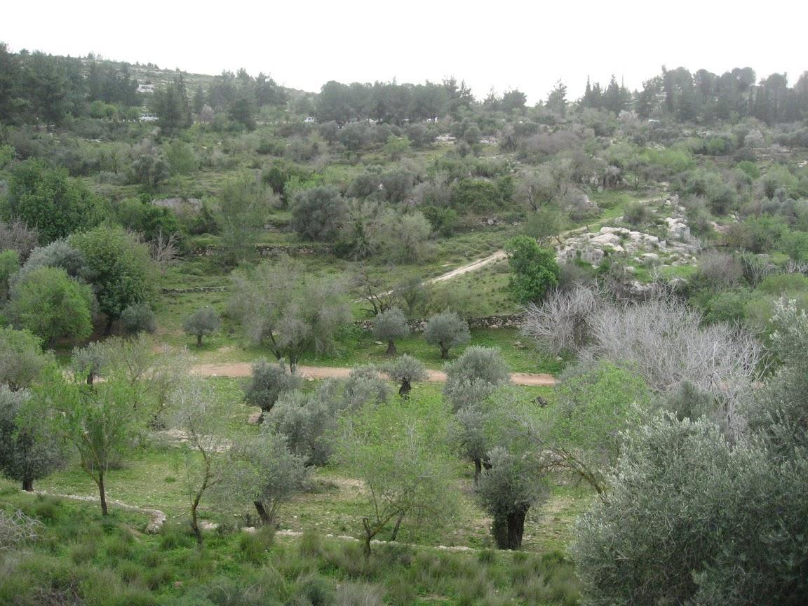 Чемпионат Израиля и прочие соревнования - Страница 3 IMG_3643