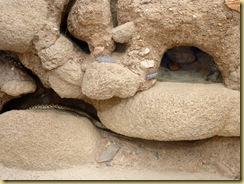 2010-04-16 - AZ, Tucson - Sonoran Desert Museum  (61)