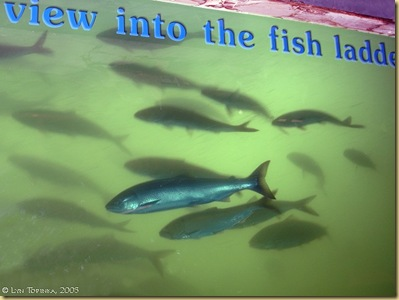 _view_into_fish_ladder_2005