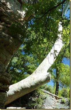 2010-09-24 - AZ, Montezuma's Well -  1035