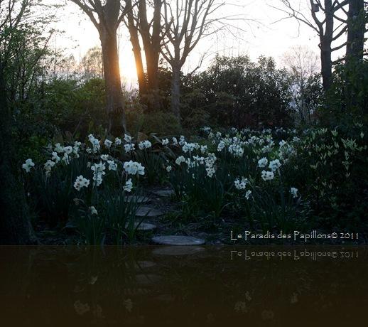 giardinomarzo2011 047