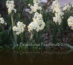 giardinomarzo2011 068