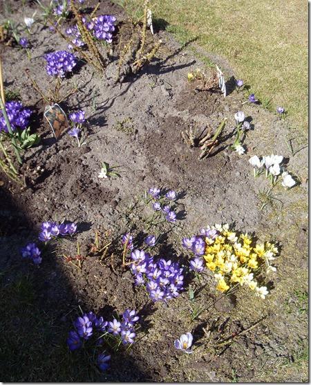 2011_03 Blumen im Garten (5)