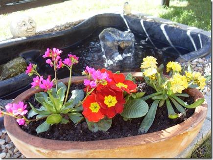2011_03 Blumen im Garten (9)