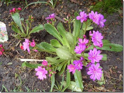 2011_04 Blumen im Garten (6)