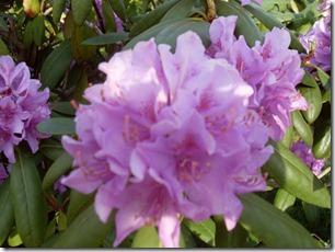 2011_05 Blumen im Garten (6) (800x600)