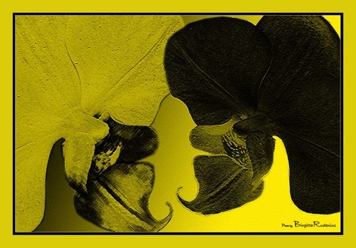 pm_20110118_gulsvart