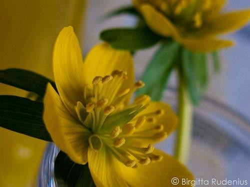 blom_20110314_gul1
