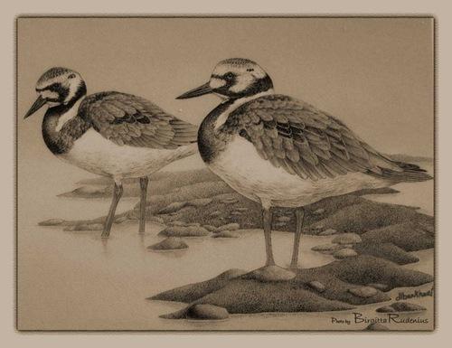 pm_20110413_birds