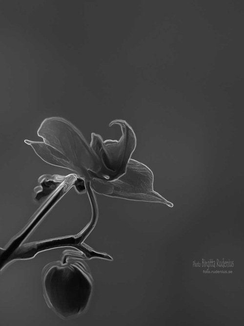 pm_20110503_orkide_bw3