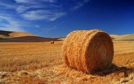 Straw Field