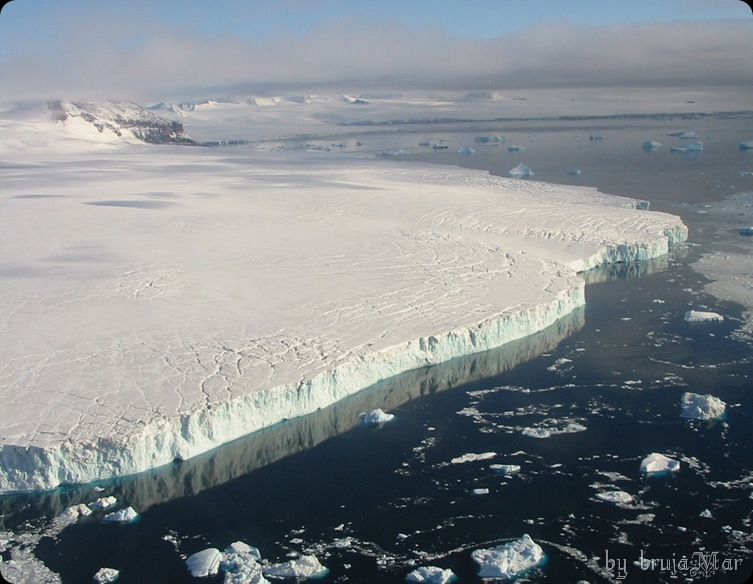 antartica-brujaMar