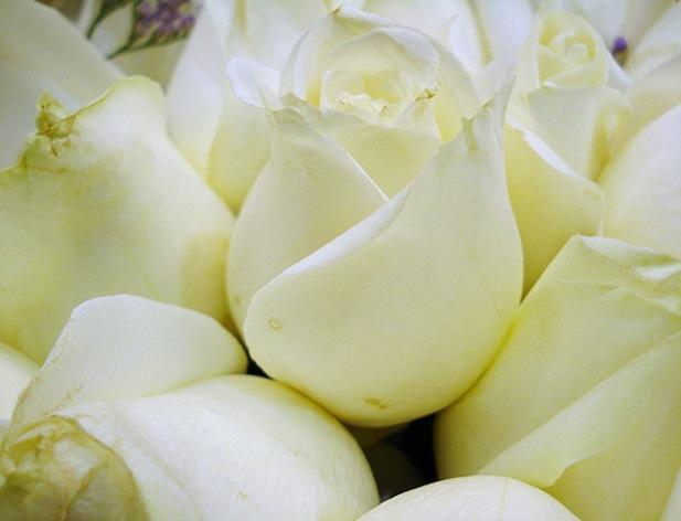 rosasblancas_5_debrujaMar