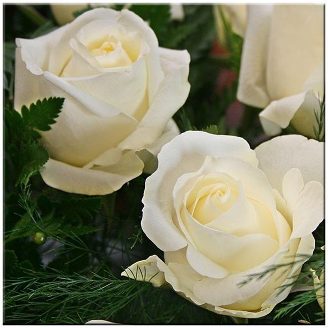 rosasblancas7_debrujaMar