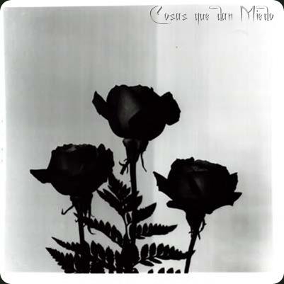 DeBrujaMar-floresnegras09