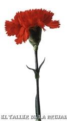 FloresRojas-ElTallerdelaBrujaMar-0508