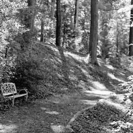 Zen Spot by Sona Decker - Novices Only Landscapes (  )