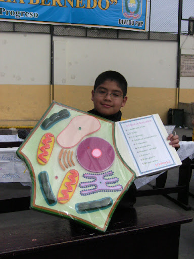 celula animal y celula vegetal. Celula Vegetal Y Sus;