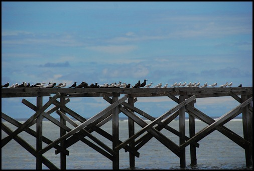 Mapia Island Bird Jetty