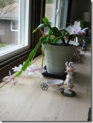 Easter cactus 01