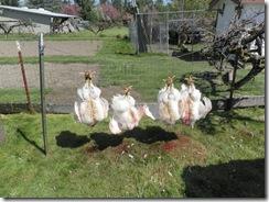 butchering 11