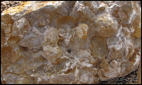 032_Chert Nodules_In_ Kaibab_ Limestone