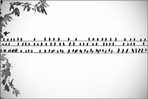 Bird Music