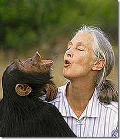 jane-goodall, hooting with chimp