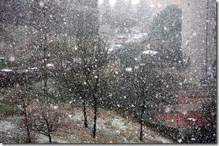 fiocco di neve-5