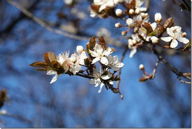 Nice Spring-24