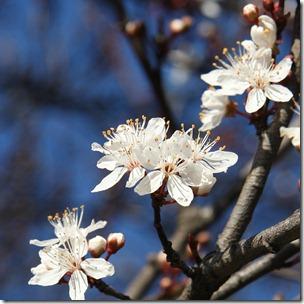 Nice Spring-15