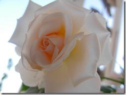 sciarpa seta rosa  -5