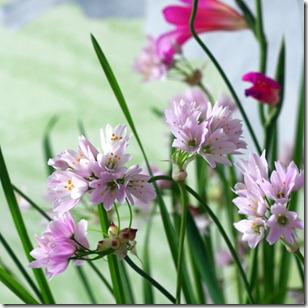 Reggi fiori-21