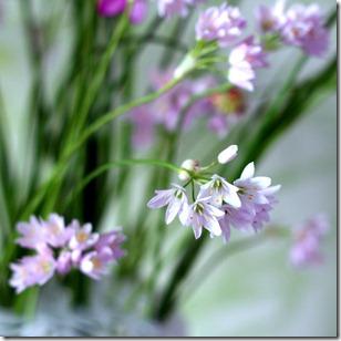 Reggi fiori-23