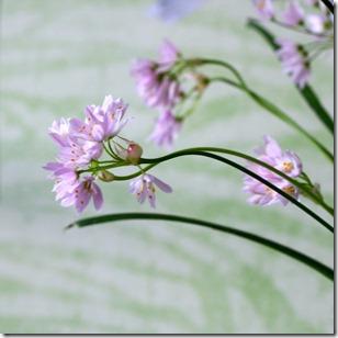 Reggi fiori-1