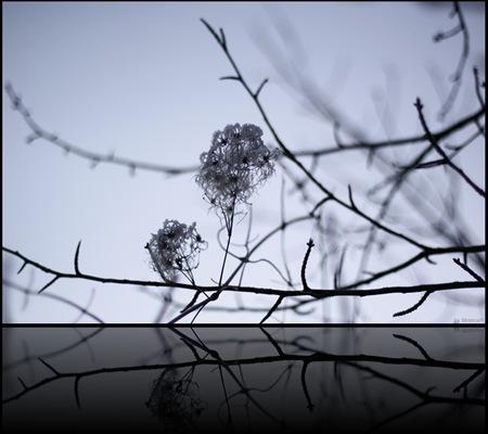 nature secret 02