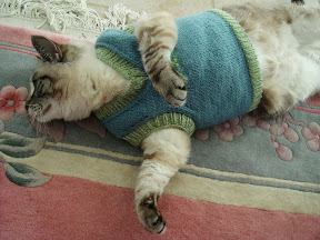 Dual perspicacity knitting cat sweaters - Knitted cat sweater pattern ...