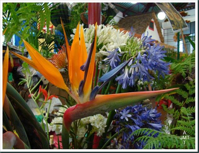 DSC03318-Funchal-marché-aux fleurs strelitzia agapanthe BW