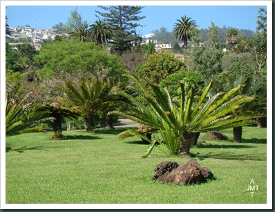 DSC03371-cycas-circinalis-(grand cycas, faux sagoutier) F cycadaceae BW