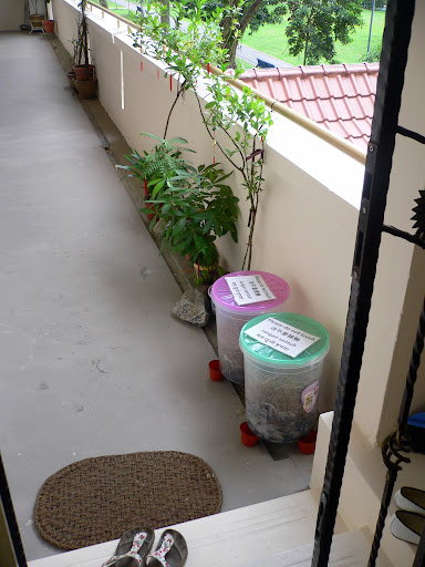 Compost Bins Update: Month 1, Week 2 | Composting In Singapore