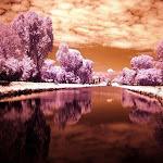 infraredphotography4.jpg