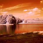 infraredphotography2.jpg