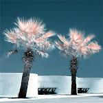 infraredphotography10.jpg