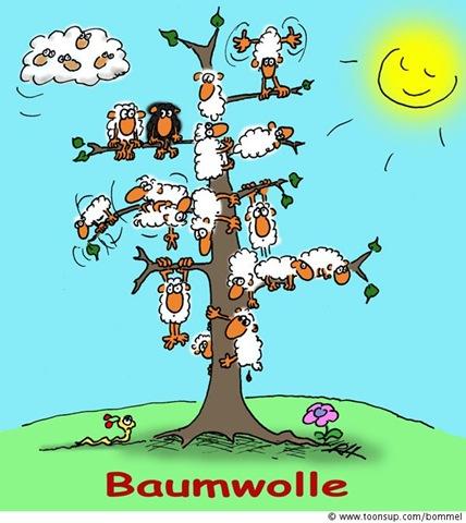 baumwolle_080617_2004
