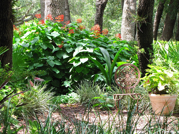 Hoe and Shovel: Designing with Florida Natives and Florida-Friendly Florida Native Erfly Garden Design on florida native gardening, florida native vegetation water, florida native yellow flowers, florida native grasses, florida plants, florida trees flowering perennial for hummingbirds,