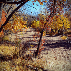 Fall colors by Jeffrey T Johnson - Landscapes Forests ( seasons, fall, trees, outside, country )