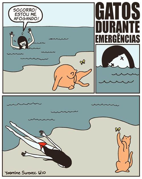 gatosduranteemergencias Comportamento típico