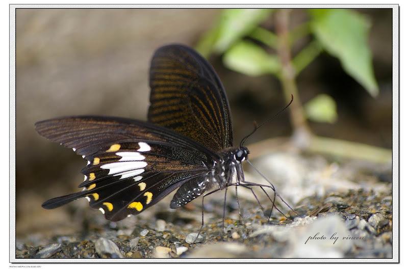 蝶影重重-彩蝶瀑布