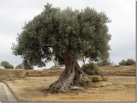 tree-Agrigento